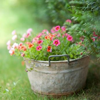 Wie eine Zinkwanne bepflanzen?