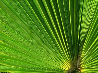 Palme_R_K_B_by_Rainer Sturm_pixelio.de