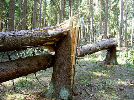Windbruch_Wiki_Walter J. Pilsak