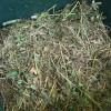Kompost_ksd5_Wikipedia