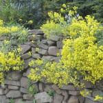 Trockenmauer aus Natursteinen | © pixelio.de/ Wilhelmine Wulff