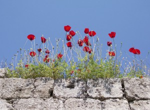 Trockenmauer | © pixelio.de Hansjoerg Schultheiss
