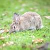 Wildkaninchen können im Garten großen Schaden anrichten | Foto: animal_planet / fotolia.com