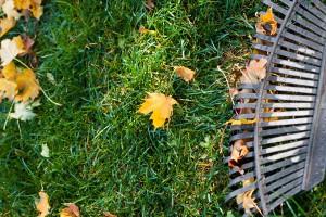 Rasenpflege: Im Herbst das Laub vom Rasen harken | © fotolia