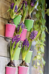 Vertikales Gärtnern auf dem Balkon | Foto: Blumenbüro Holland