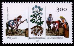 Sondermarke 350 Jahre Kartoffelanbau in Deutschland Foto: Wikipedia gemeinfrei