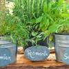 Kräuter lassen sich prima im Topf kultivieren | Marmel – Fotolia.com