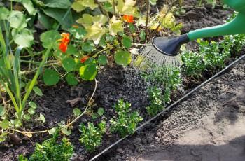Nach dem Einpflanzen den Buchs ordentlich wässern | Foto: phlora.de
