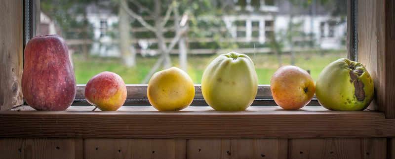 KLeine Apfelgalerie im Pomarium Anglicum | Foto: phlora.de