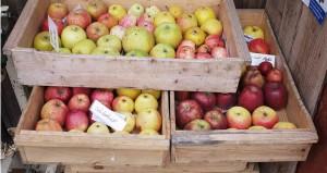 Viele Apfelsorten wird man nie auf Wochenmärkten finden. | Foto: phlora.de