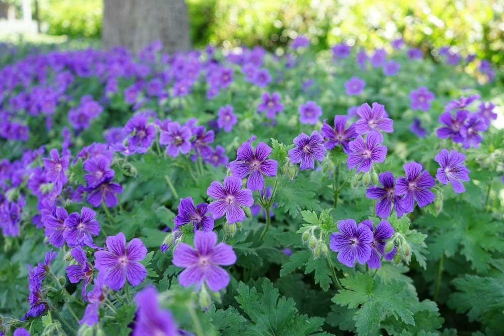 Heimische Pflanzen Für Den Garten ist dein garten wirklich gut für die umwelt phlora de