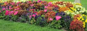 Blumenborder_Pixabay