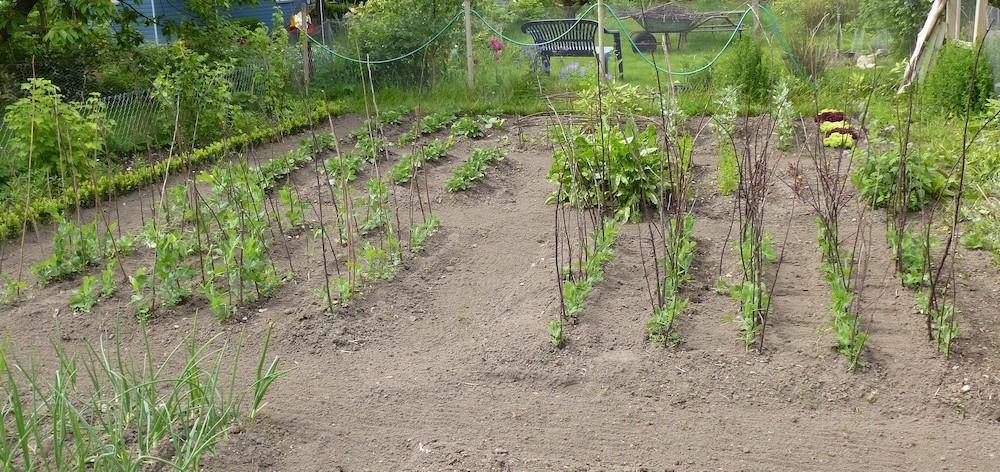 Fruchtfolge, Mischkultur, Gemüsegarten, Gemüseanbau