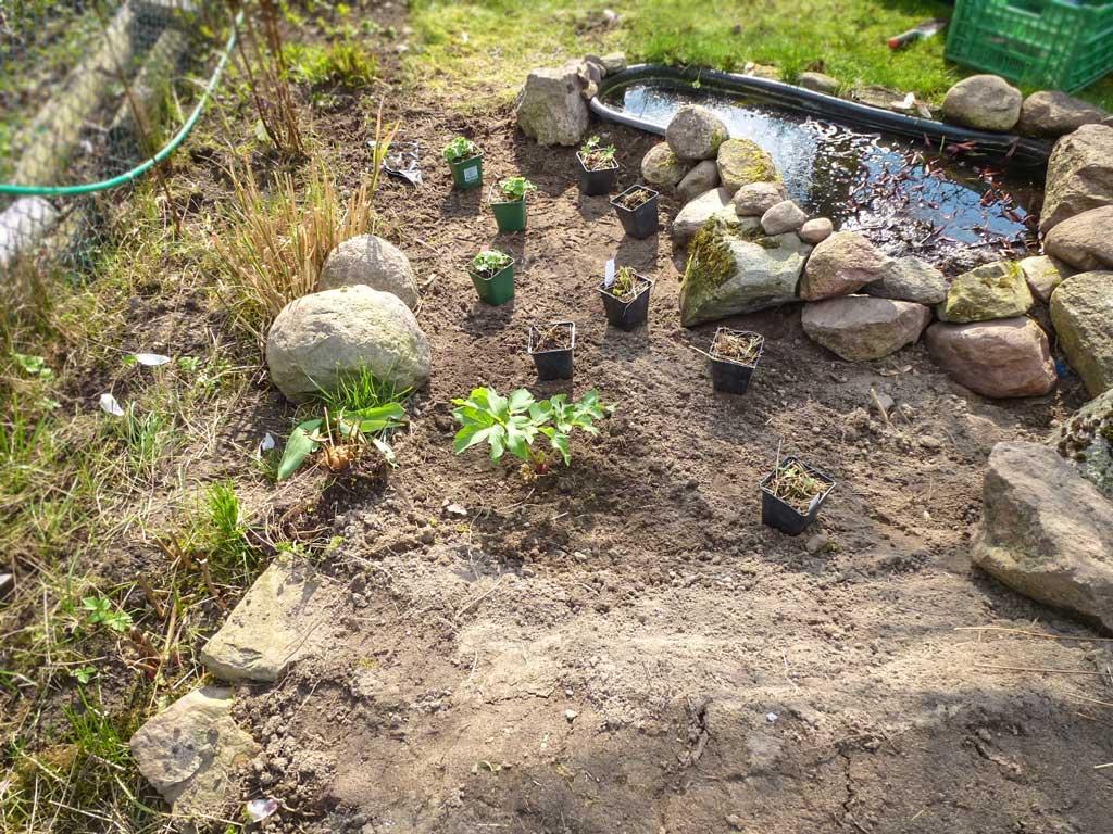 Schritt 4: Steine und Pflanzen im Sumpfbeet verteilen | © phlora.de