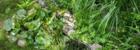 Sumpfbeet | ©phlora.de