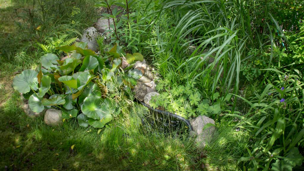 Unser neues Sumpfbeet | © phlora.de