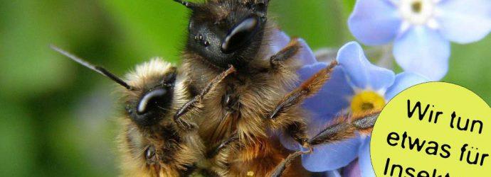 Insektensterben Kopie