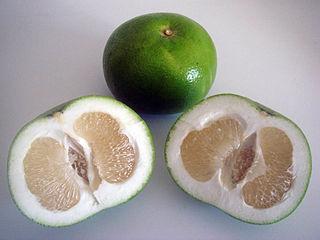 Citrus_Wikipedia_Yot