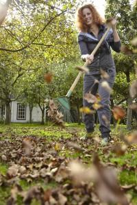 Laub vom Rasen entfernen.