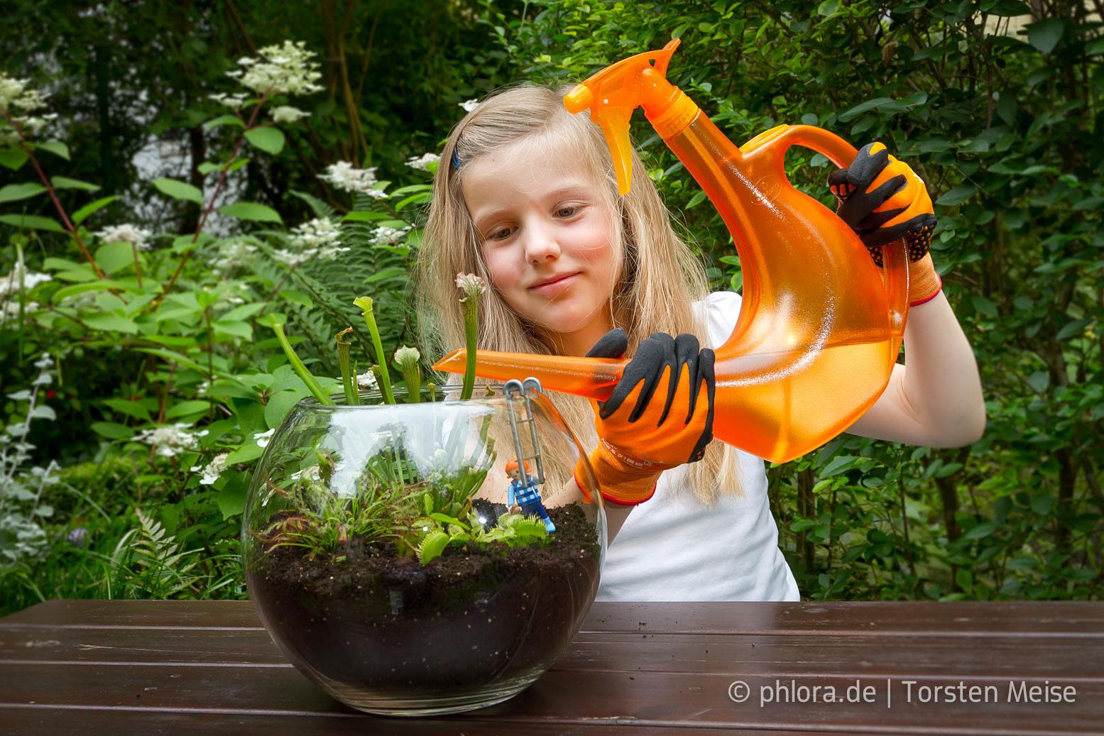 bastle mit kindern eine schale mit fleischfressenden pflanzen. Black Bedroom Furniture Sets. Home Design Ideas