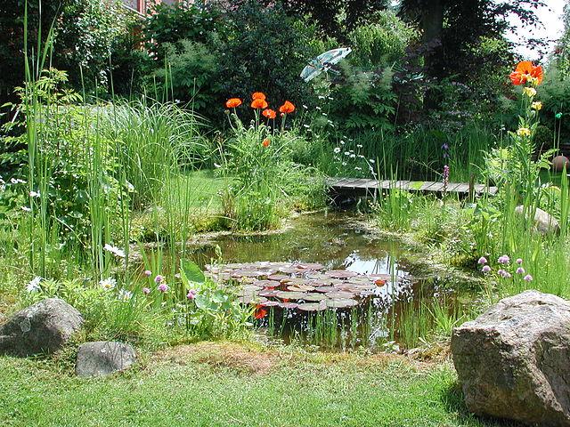Gartenteich_Wikipedia_Wilke