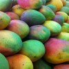 Mango_Wikipedia_Mark Benecke