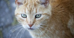 Katze im Garten | Foto: pixabay.com