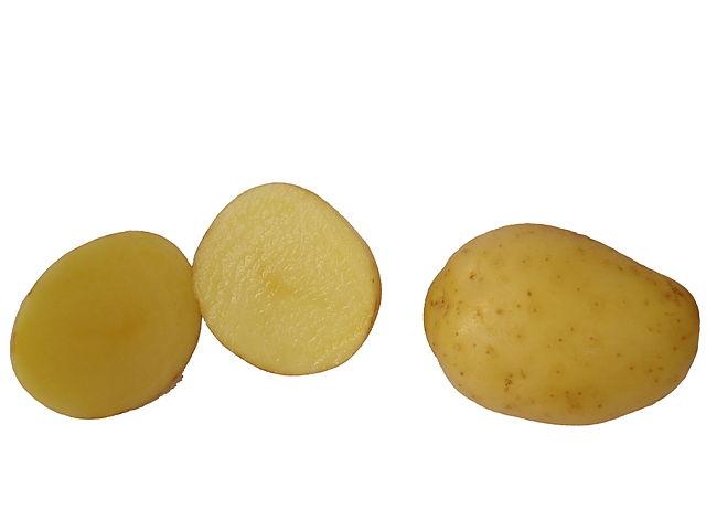 Kartoffeln_Wikipedia_WoTP