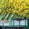 Der Herbst ist die perfekte Pflanzzeit für Gehölze | Foto: BdB