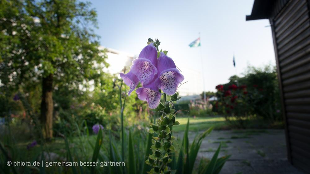 Sommer in der Laube 40