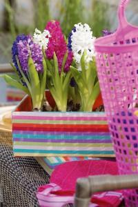 Hyazinthen in zahlreichen Farben | Foto: Blumenbüro Holland