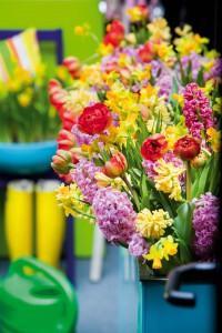 Auf dem Balkon wird es bunt | Foto: Blumenbüro Holland