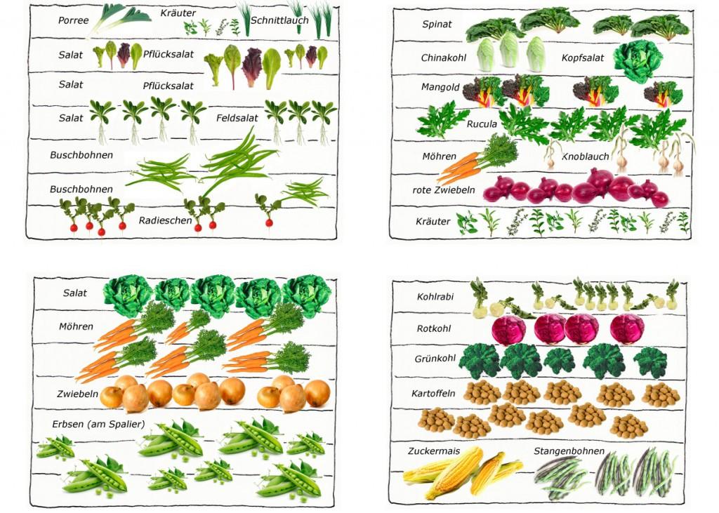 Beispiel für die Anlage eines Gemüsebeetes | phlora.de