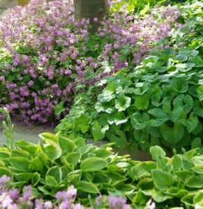 Perfekt im Schatten unter Bäumen: Storchschnabel, Elfenblume und Funkien | Foto: BGL