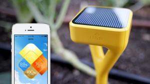 Edyn: App und Sensor für den Gemüsegarten