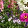 Blumenbeet-zinnia-495015_12
