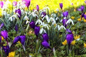 So soll das im nächsten Frühling aussehen © Pixabay.com
