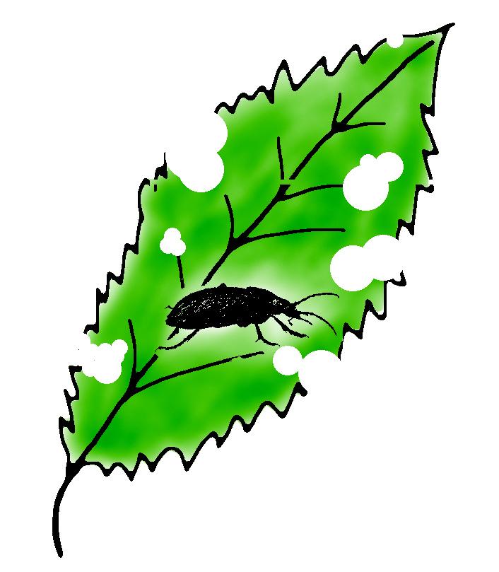 Schädling Ungeziefer auf Blatt Zimmerpflanze Lochfraß Löcher
