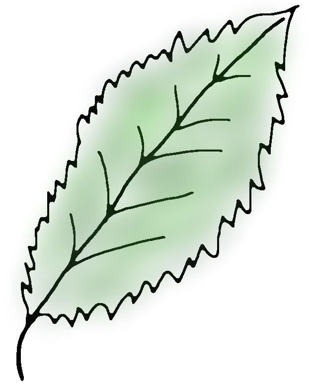 Blatt einer Zimmerpflanze die unter Lichtmangel leidet