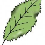 Calciummangel Zimmerpflanze Blatt Zeichnung