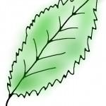 Zinkmangel Zimmerpflanze Blatt Zeichnung