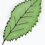 Zimmerpflanze Blatt Zeichnung zu wenig Magnesium