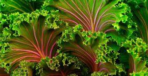 Pixabay_plant-690051_1280