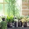 Zimmerpflanzen_Pixabay