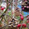 Powerkörner für Vögel | Foto: Phlora.de