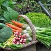Frisches Gemüse aus dem eigenen Garten | Foto: coco/Fotolia.com