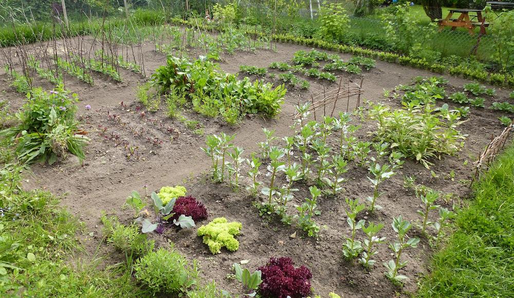 Gemuesegarten Fruchtfolge Mischkultur