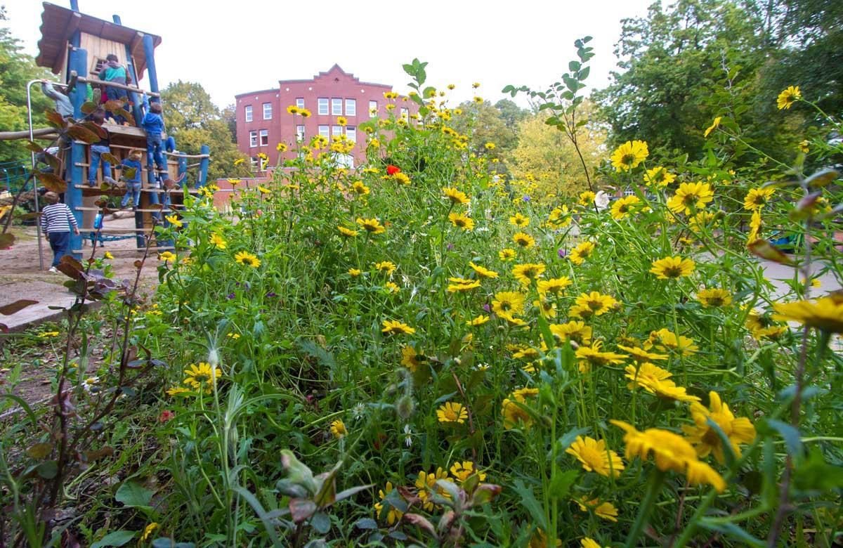 Grundschule Sternschanze: naturnahes Beet auf dem Schulhof