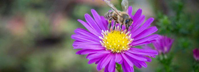 Mehr Blüten bitte! Städte sollten mehr für den Artenschutz tun.